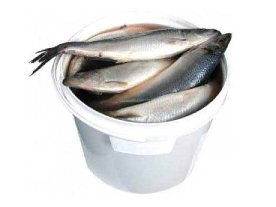Сельдь слабой соли 5 кг.
